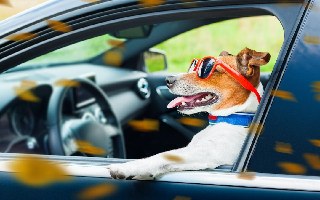 Road Trip Safety Tips When Taking Your Dog